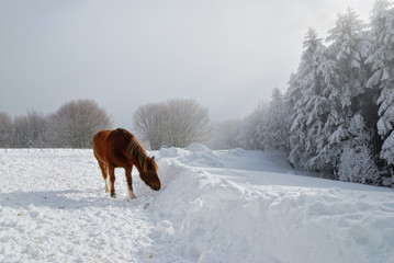 snowy landscape  on the hill with horse