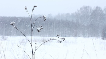 Burdock. Winter scenery background