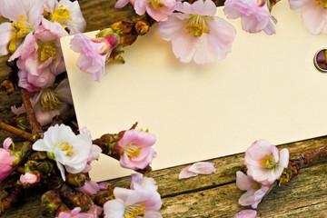 Anhänger zwischen Kirschblüten auf Holz