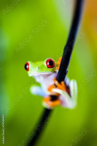 Colorful exotic world, frog
