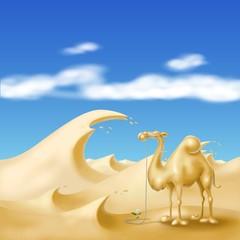 cammello nella bufera