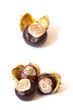 Collection of chestnuts isolated on white