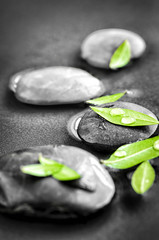 Stones with green leaves and water drops