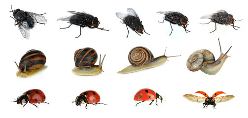 Collection of insects isolated on white