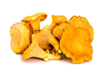 Autumn chanterelles mushrooms