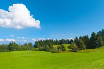 Sommerliche Naturlandschaft mit grünen Wiesen