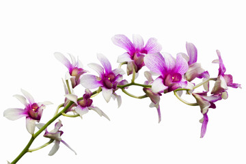 Pink Orchids on white background(This Image contains clipping pa