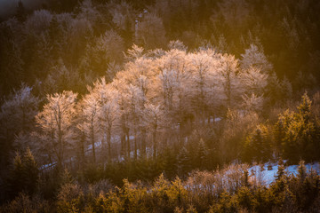 icy trees in the valley