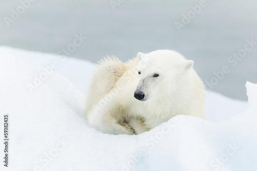 Foto op Plexiglas Antarctica 2 Polar bear at Svalbard