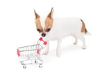 Sad Chihuahua with empty shopping cart