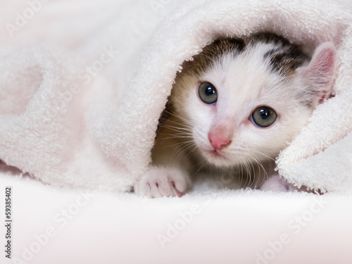 kitten nestled against a white towel