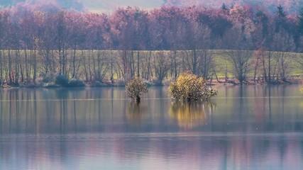 tranquillité lac et arbres