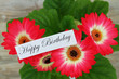 Happy birthday card with gerbera daisies