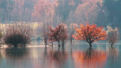 Automne nature lac