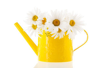 White daisies in yellow watering can