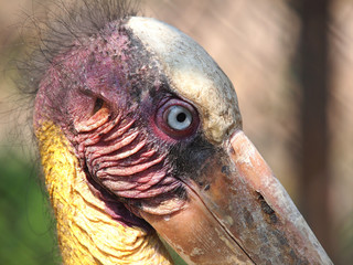eye of realy ugly bird