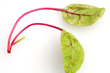 junge mangoldblätter