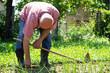 Senior male gardener