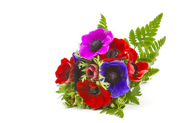 Bouquet Anemones on white background