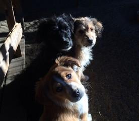 Yanal ışıkta köpekler