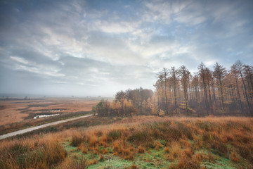misty clouded autumn morning over swamps and forest