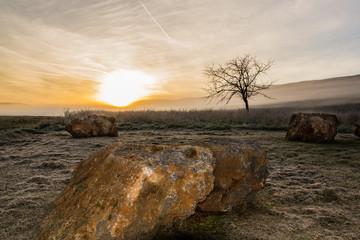 Albero solitario con pietre