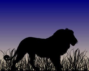 Loewe in der Savanne im Morgengrauen