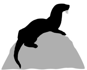 Otter auf Fels