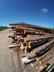 The logs on the road