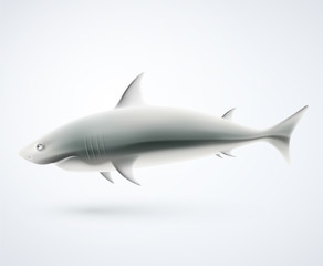 Isolated shark