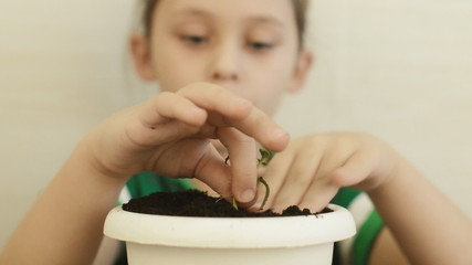 Girl planting a plant, close up