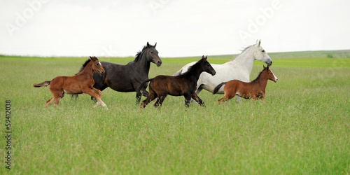 Fotobehang Paarden Horse runs gallop on the field