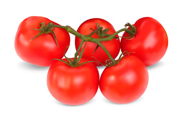 Set of red tomatoes. Realistic Vector illustration. Isolated on
