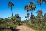 Palms on El Palmar National Park, Argentina