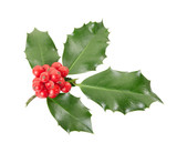Holly twig on white with clipping path