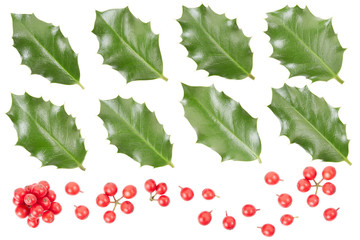 Holly leaves and berries collection on white, clipping path
