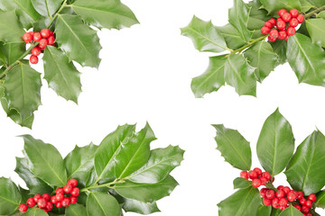 Holly twig border, Christmas decoration on white, clipping path