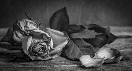 A black and white vintage image of a rose on wooden table