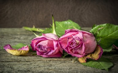 Withering pink roses lying on a rustic wooden table