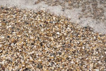 Conchas de mar en una playa con ola