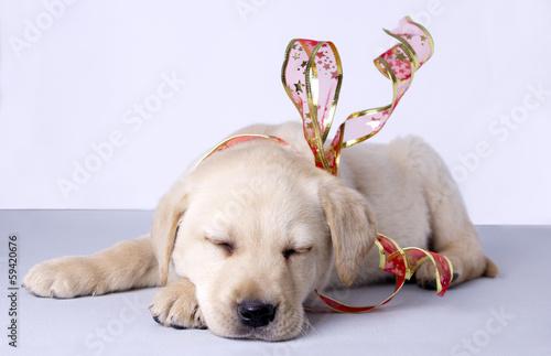 Puppy dog farmer of retriever Poster