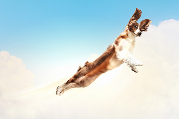 Basset hound flying between the clouds