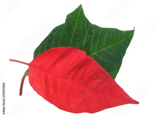 Leaves of  Christmas Star