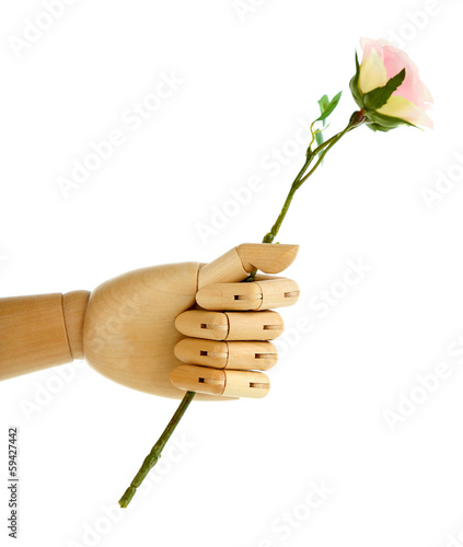 Rose in wooden hand isolated on white