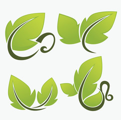 vector collection of natural drinks and fresh green leaves