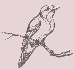 "Vector drawing of a series of sketches ""Birds"". Flycatcher"