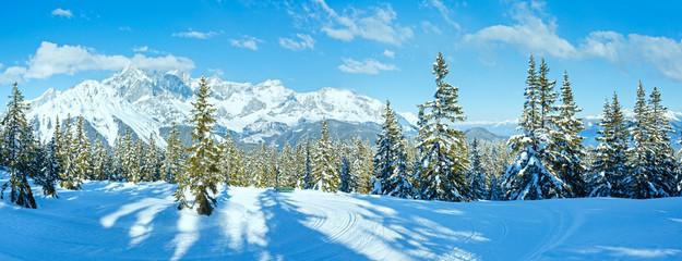 Winter mountain fir forest landscape ( Austria))