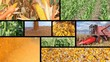 Corn Production - Collage