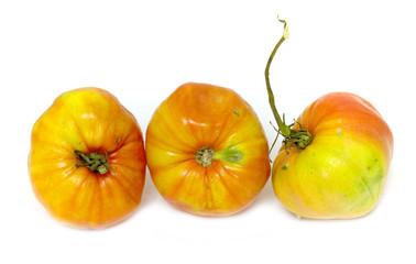 old tomato on white background