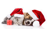 Scottish kitten and puppy with santa hat sleeping together